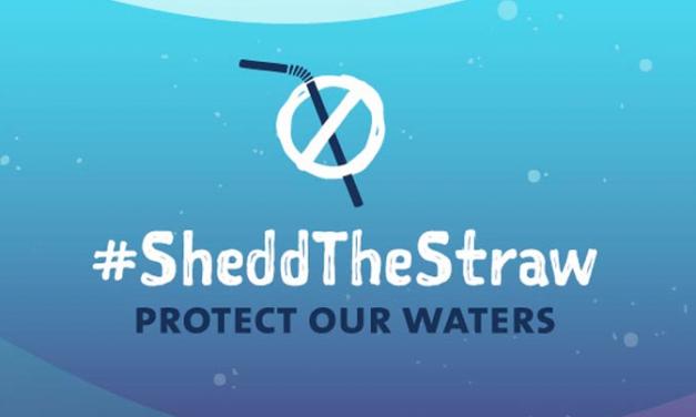 Shedd the Straw update